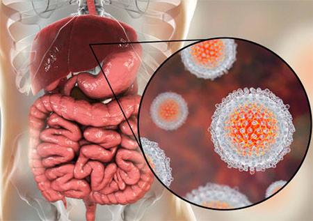 Вирус гепатита под микросокпом
