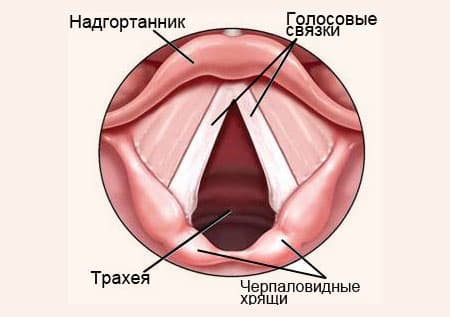 Голосовые связки